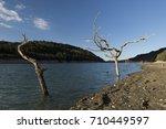 lake tree | Shutterstock . vector #710449597