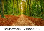 pathway in the woods during... | Shutterstock . vector #710567113