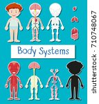 little boy and body system... | Shutterstock .eps vector #710748067