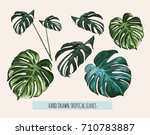beautiful hand drawn botanical... | Shutterstock .eps vector #710783887