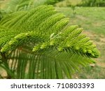Small photo of Green feel with nature