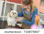 groomer with pet dog | Shutterstock . vector #710875807