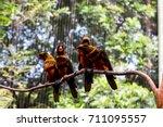 birds flock over twigs   Shutterstock . vector #711095557