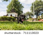 black labrador retriever puppy... | Shutterstock . vector #711113023