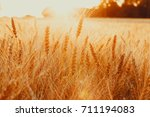 gold wheat field against the... | Shutterstock . vector #711194083