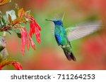 hummingbird with red bloom... | Shutterstock . vector #711264253