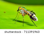 macro closeup on long legged fly | Shutterstock . vector #711391963