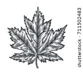 engraving maple leaf isolated... | Shutterstock .eps vector #711502483