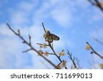 branches with beautiful  peach... | Shutterstock . vector #711699013