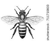 honey bee  | Shutterstock .eps vector #711710833