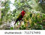 birds alone   Shutterstock . vector #711717493