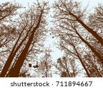 deciduous trees in the fall... | Shutterstock .eps vector #711894667