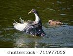 goose show off wings   Shutterstock . vector #711977053