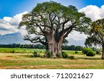 baobab tree | Shutterstock . vector #712021627
