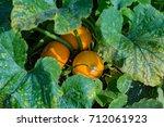 An Unusual Large Orange Pumpki...