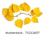 Sprig Of Birch With Yellow...