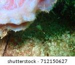 Yellowline Arrow Crab Climbing...
