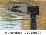 saltwater or estuarine... | Shutterstock . vector #712158577
