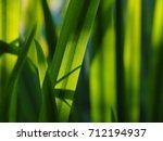 reeds | Shutterstock . vector #712194937