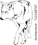 large adult wolf drawn in ink... | Shutterstock .eps vector #712238707
