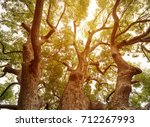 under the shade of tall trees... | Shutterstock . vector #712267993