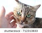 Stock photo hand touch cute cat cute cat feeling moody 712313833