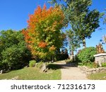 Sugar Maple Tree In...