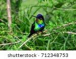 hummingbird costa rica | Shutterstock . vector #712348753