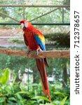 Couple Of Colorful Amazon...
