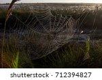 beautiful spider web in dew...   Shutterstock . vector #712394827