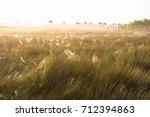 beautiful spider web in dew...   Shutterstock . vector #712394863