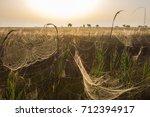 beautiful spider web in dew...   Shutterstock . vector #712394917