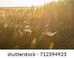 beautiful spider web in dew...   Shutterstock . vector #712394923