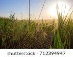 beautiful spider web in dew...   Shutterstock . vector #712394947