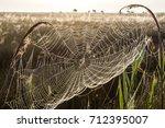 beautiful spider web in dew...   Shutterstock . vector #712395007