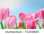Tulips Flowers On Blue Sky And...