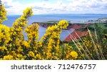 Yellow Flowering Gorse Bush. ...