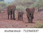 Elephant Family Lumbering...