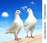 Two White Pigeon On Perch With...