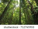 rainforest in thailand   Shutterstock . vector #712765903