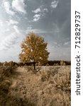young oak tree   infrared ir   Shutterstock . vector #712829737