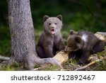 young brown bear in the forest. ... | Shutterstock . vector #712892467