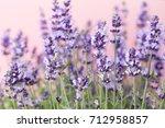 lavender flowers on a white... | Shutterstock . vector #712958857
