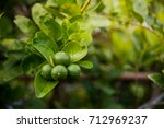 closeup of lime fruit hanging... | Shutterstock . vector #712969237