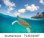 swimming with turtles   views... | Shutterstock . vector #713018287