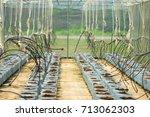 organic farm or organic farm