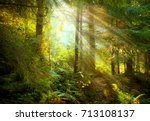 magical deep foggy autumn... | Shutterstock . vector #713108137