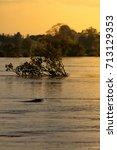 mekong river dolphin | Shutterstock . vector #713129353