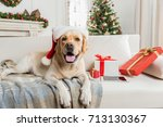 nice labrador is posing on couch | Shutterstock . vector #713130367