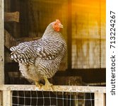 local farm view with chicken.... | Shutterstock . vector #713224267